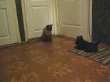 Маня, жизнь с котом))